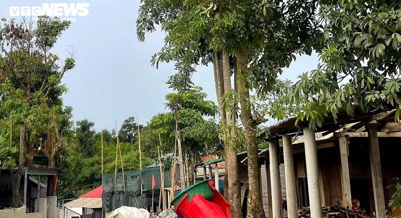 Ảnh: Hiện trường 'bắt vạ' 50 triệu/cây gỗ tạp, nhiều công an bị đánh nhập viện - 10