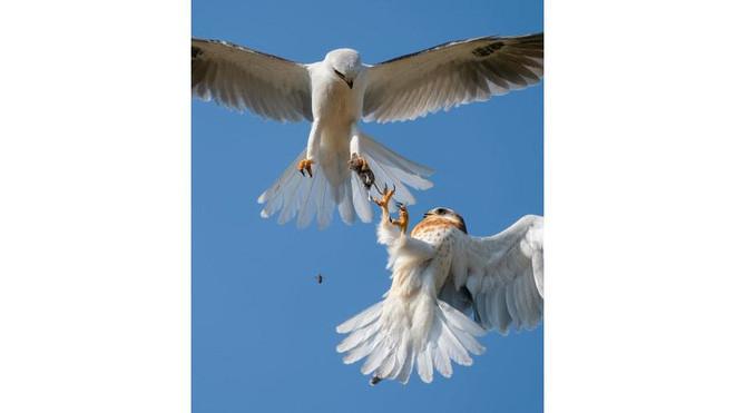 Ấn tượng những bức ảnh cuộc sống thiên nhiên hoang dã - Ảnh 5.