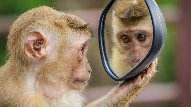 Tại sao con người có thể nhận ra bản thân mình trong gương, còn hầu hết các loài động vật trên hành tinh của chúng ta lại không? - Ảnh 1.