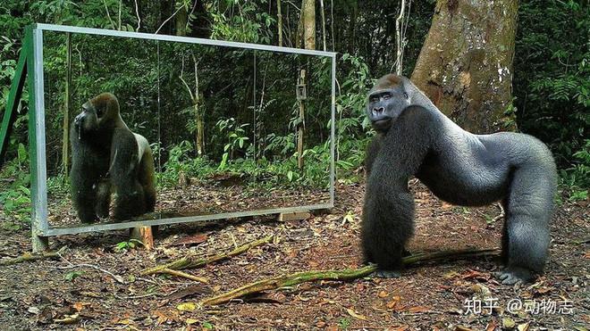 Tại sao con người có thể nhận ra bản thân mình trong gương, còn hầu hết các loài động vật trên hành tinh của chúng ta lại không? - Ảnh 7.