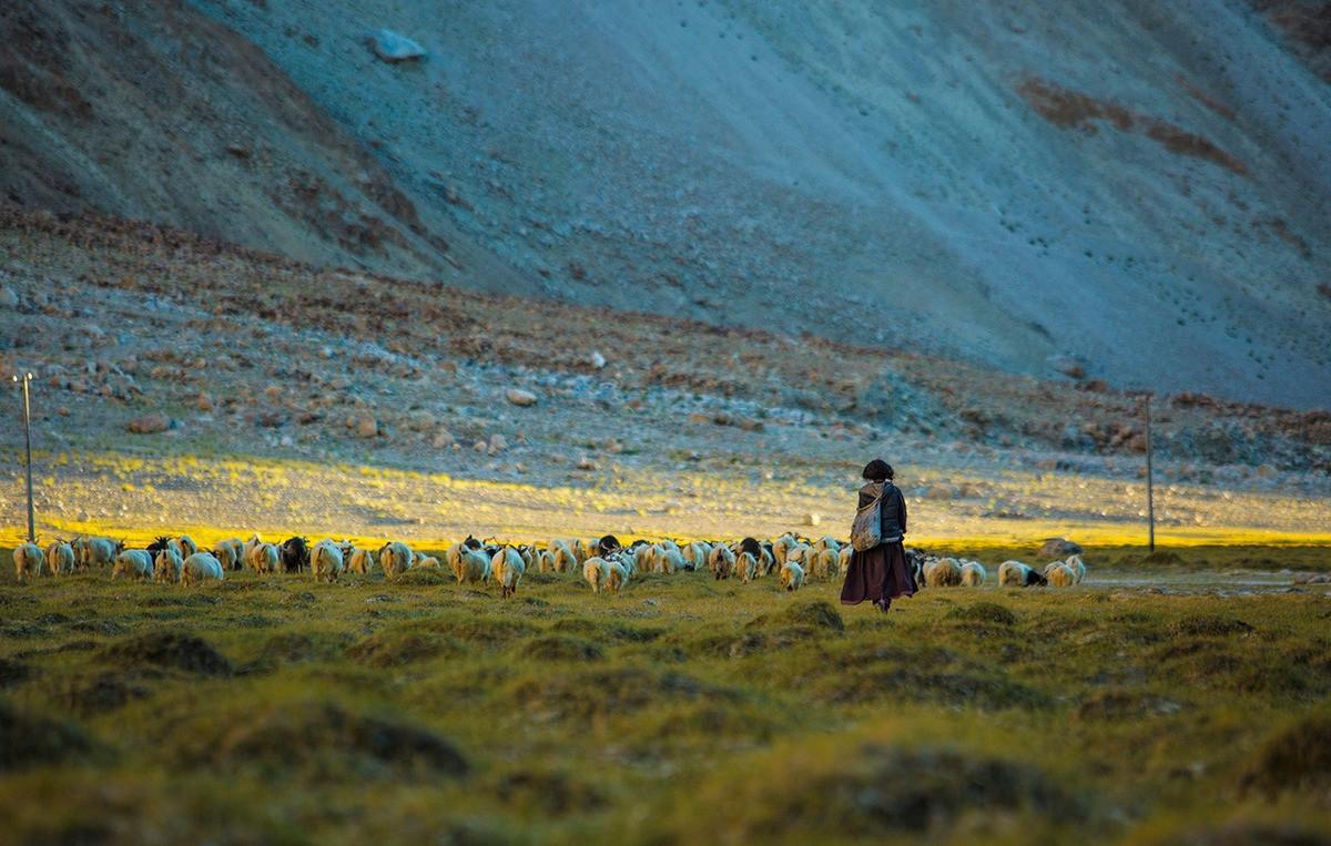 Hành trình khó quên đến Ladakh của nhiếp ảnh gia Việt - 12