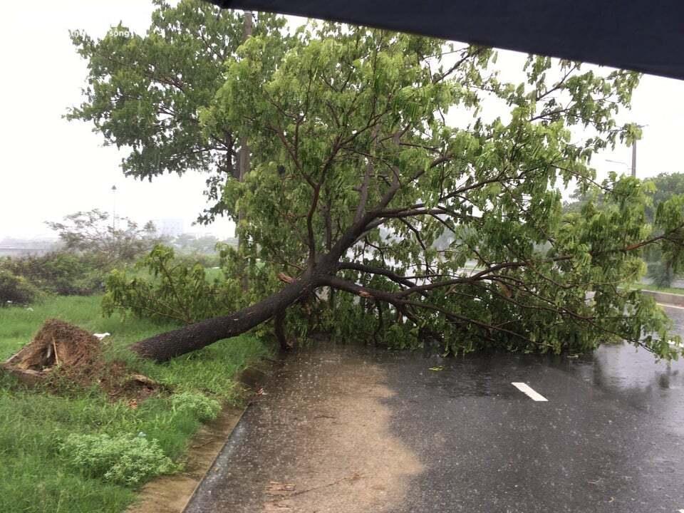 Ảnh: Bão số 5 gây mưa to, gió quật đổ cây, ngập úng ở các tỉnh miền Trung - 11