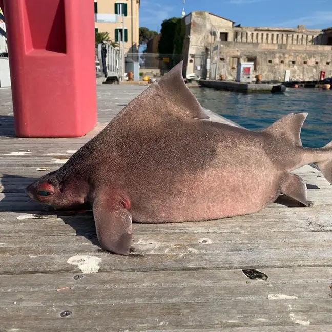 Thuỷ thủ sốc khi phát hiện cá lạ, thân cá mập mặt con heo - Ảnh 1.