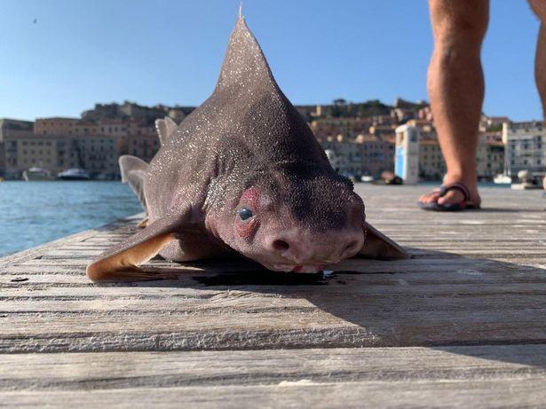 Thuỷ thủ sốc khi phát hiện cá lạ, thân cá mập mặt con heo - Ảnh 2.