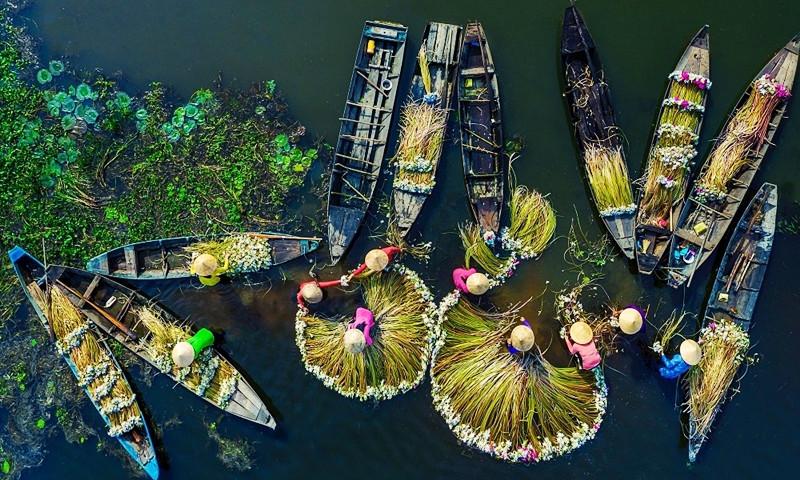 Bức ảnh thu hoạch hoa súng khiến du khách thế giới muốn đến Việt Nam ngay lập tức - 1