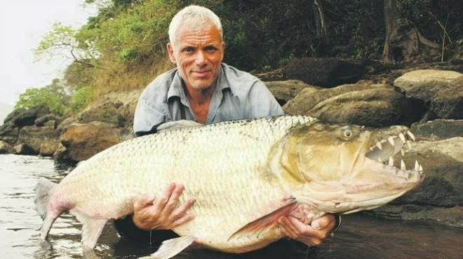 Cá hổ Goliath có thể dài tới 2m, nặng 70kg và thậm chí không sợ cá sấu! - Ảnh 5.