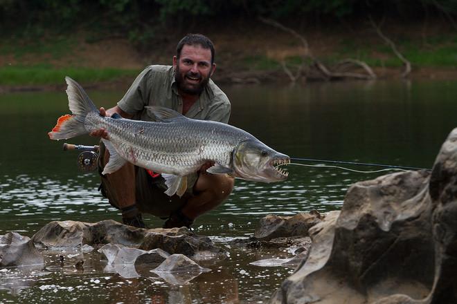 Cá hổ Goliath có thể dài tới 2m, nặng 70kg và thậm chí không sợ cá sấu! - Ảnh 8.