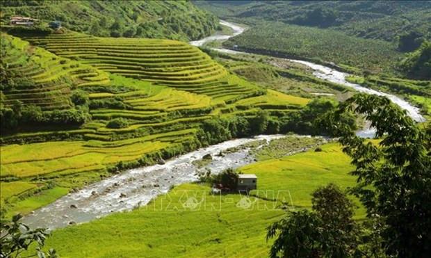 Lai Chau: Mua Vang tren vung bien gioi Si Lo Lau hinh anh 2