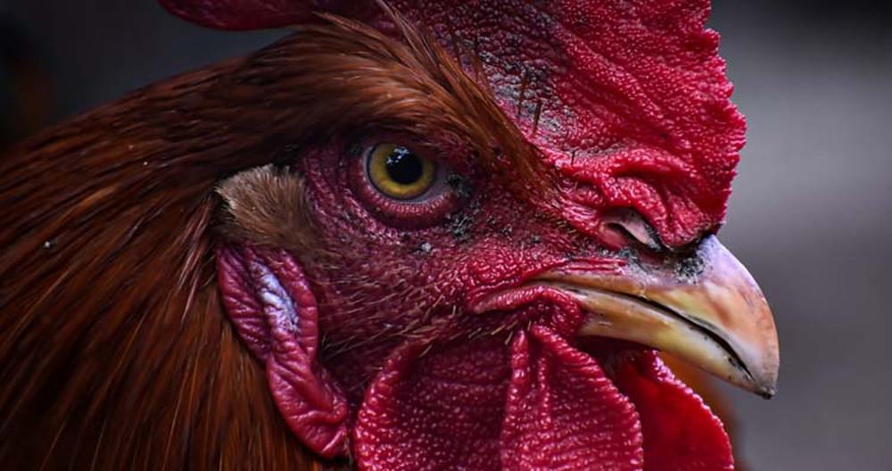 Những sự thật lạ lùng về các loài động vật mà bạn không hề hay biết! - Ảnh 4.