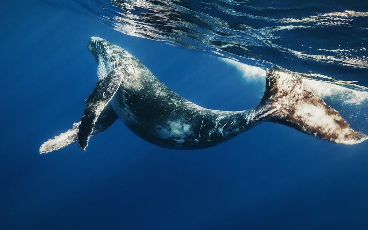 Tour độc đáo ngắm cá voi bảo vệ môi trường ở Iceland - 1