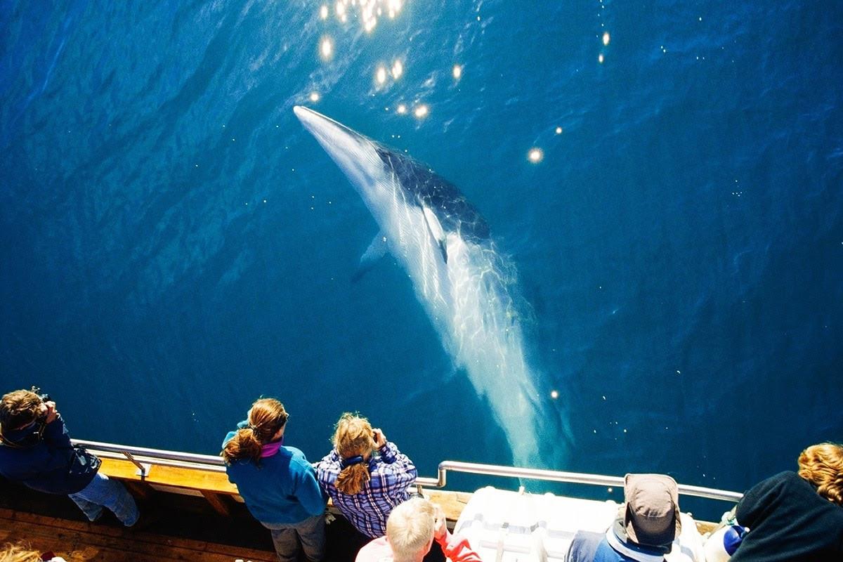 Tour độc đáo ngắm cá voi bảo vệ môi trường ở Iceland - 3