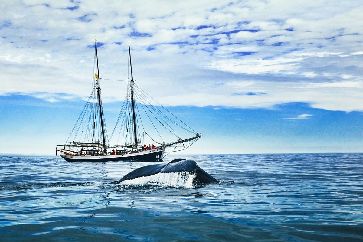 Tour độc đáo ngắm cá voi bảo vệ môi trường ở Iceland - 7
