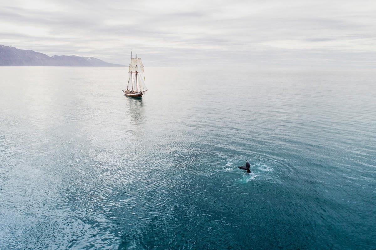 Tour độc đáo ngắm cá voi bảo vệ môi trường ở Iceland - 9