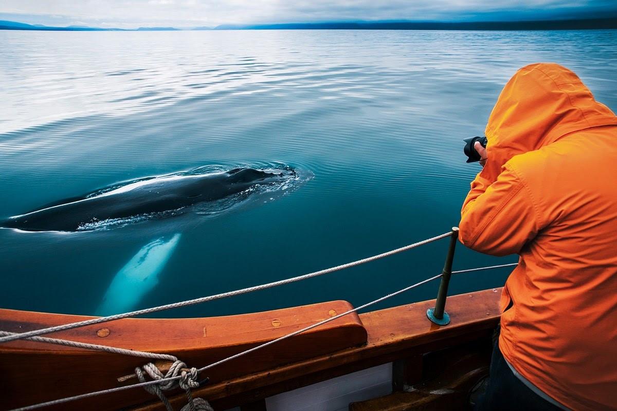 Tour độc đáo ngắm cá voi bảo vệ môi trường ở Iceland - 11