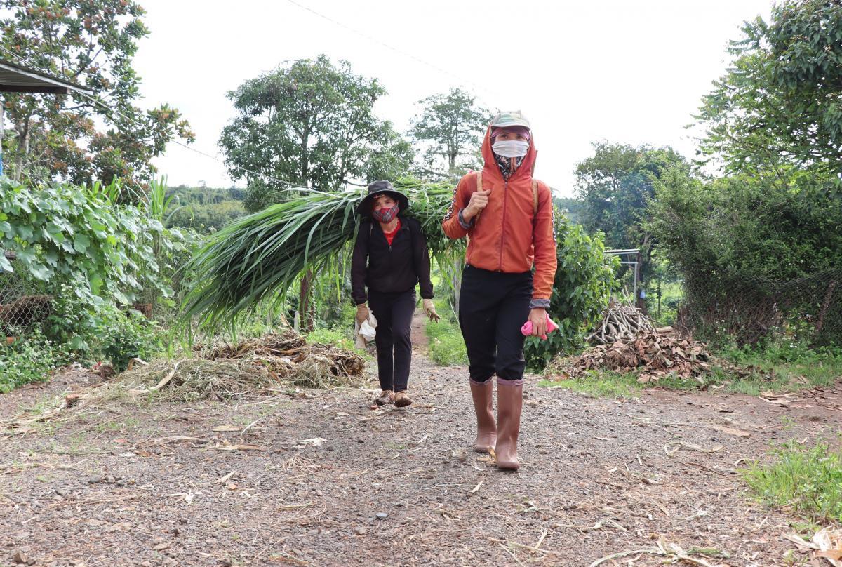 Người dân buôn Ea Bhốk, xã Ea Bhốk cắt cỏ cho đàn gia súc của gia đình