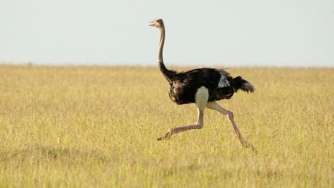 9 loài động vật nhanh nhất trên cạn, dưới nước và trên trời, sức người không có cửa thắng - Ảnh 2.
