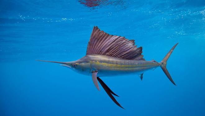 9 loài động vật nhanh nhất trên cạn, dưới nước và trên trời, sức người không có cửa thắng - Ảnh 5.