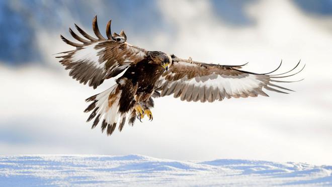 9 loài động vật nhanh nhất trên cạn, dưới nước và trên trời, sức người không có cửa thắng - Ảnh 9.