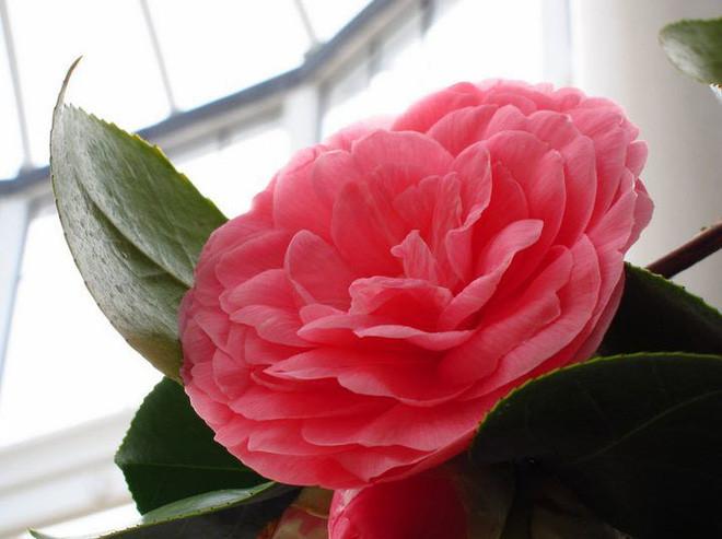 Loài hoa đẹp hiếm có chỉ tồn tại ở hai địa điểm trên thế giới - Ảnh 5.