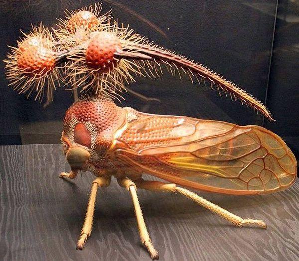 Rầy vằn Brazil - Sinh vật trông giống người ngoài hành tinh nhất trên Trái Đất - Ảnh 4.
