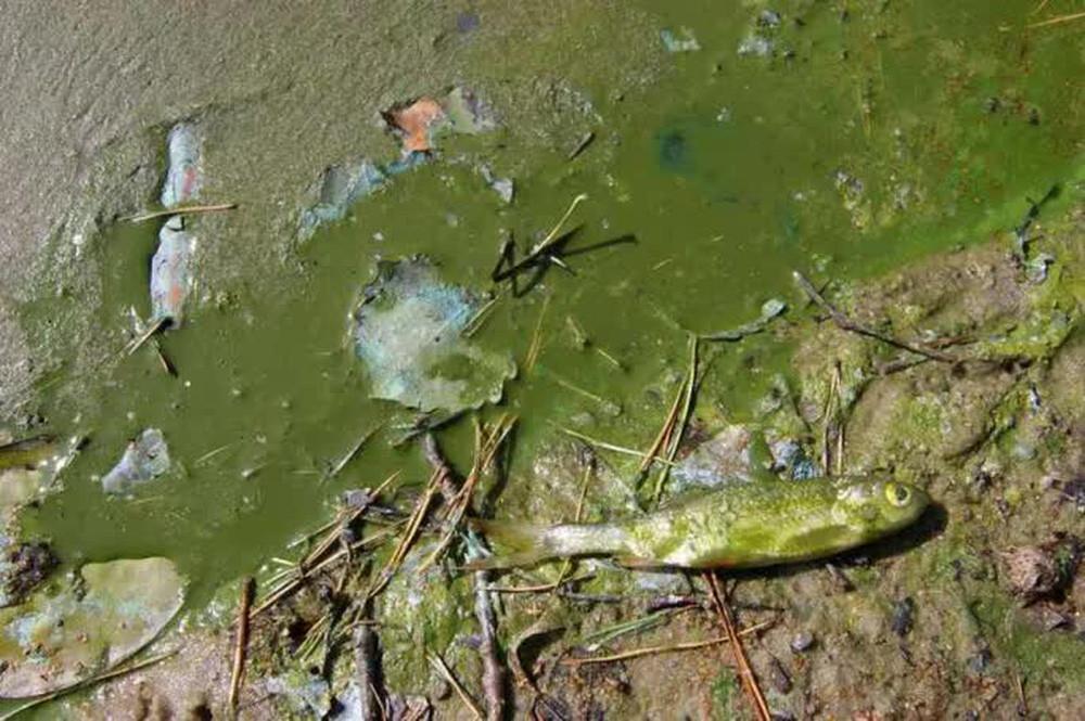 Ngăn chặn súp độc gây ra cuộc đại tuyệt chủng như 252 triệu năm trước - Ảnh 1.