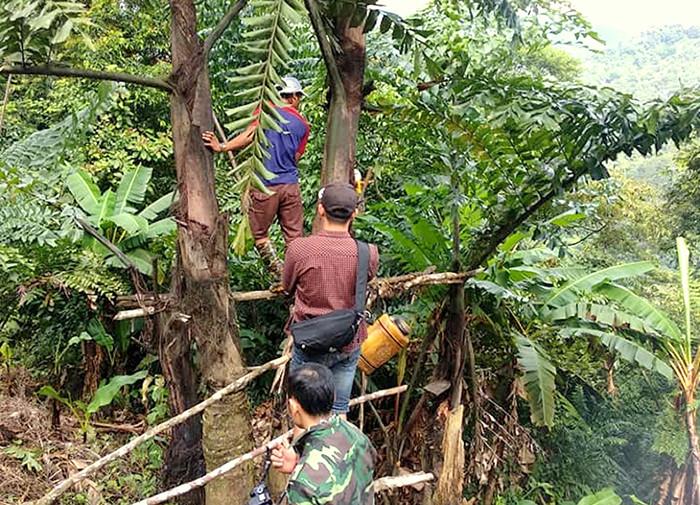 Đặc sản 'rượu trời' chảy ra từ thân cây ở Quảng Nam