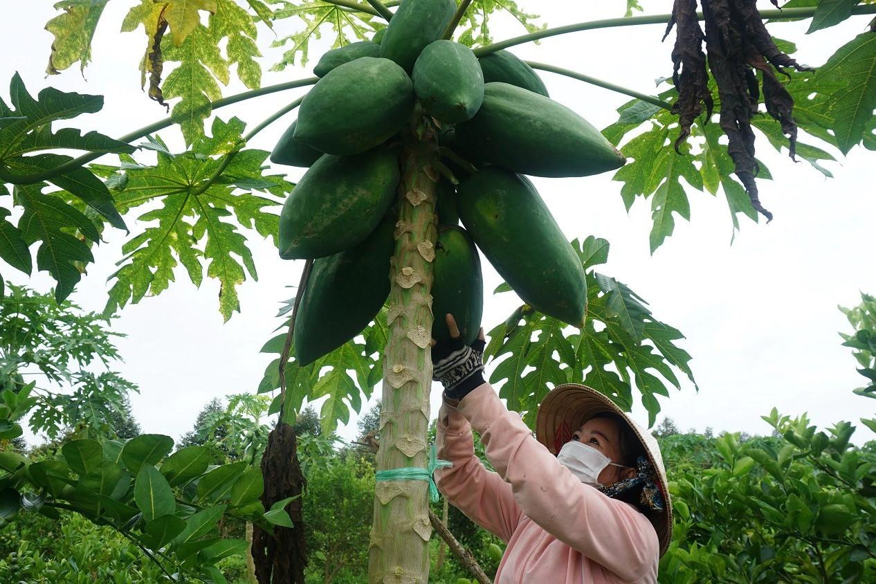 Dành tặng cả vườn rau, cây trái hỗ trợ những người khó khăn mùa dịch - 1