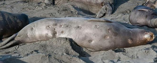 Loài cá mập có cái tên dễ thương, nhưng nhìn phát là biết thương không nổi - Ảnh 3.