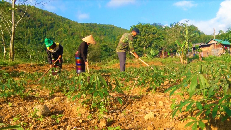 Nông dân xã Hướng Lập chăm sóc cây sắn (mì)