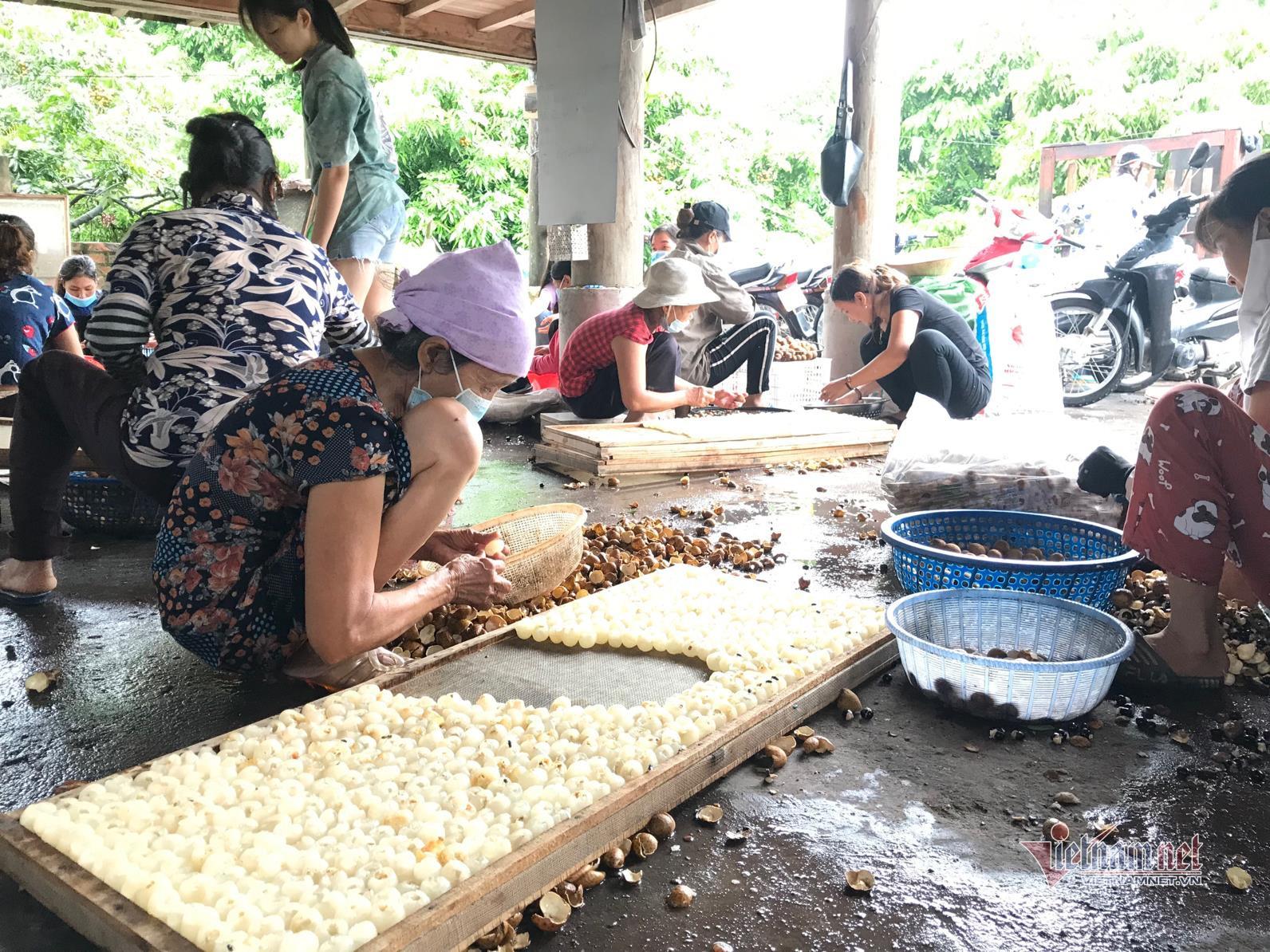 Đặc sản nhãn Hưng Yên mất mùa, giá rẻ hơn rau - 3