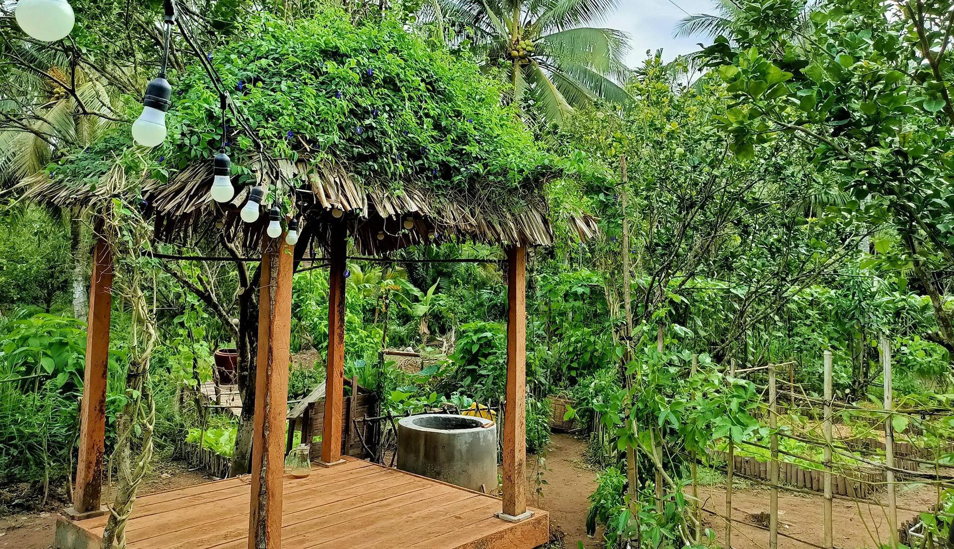Bỏ phố về quê, cặp vợ chồng Bến Tre làm khu vườn 500m2 tràn ngập rau trái - 3