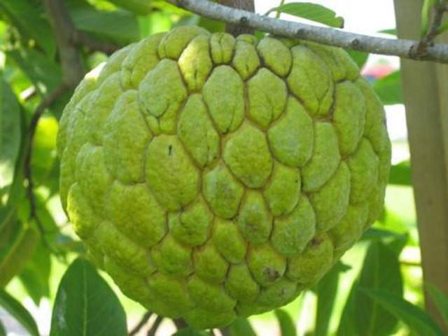 5 loại trái cây không hạt làm mưa làm gió trên thị trường - Ảnh 1.