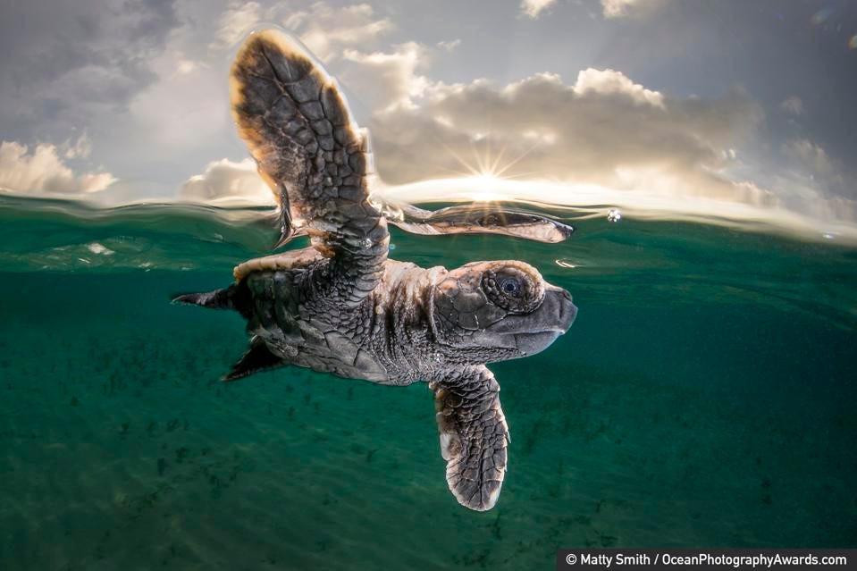 Khám phá cuộc sống dưới biển xanh sâu thẳm qua giải thưởng Nhiếp ảnh đại dương - 3