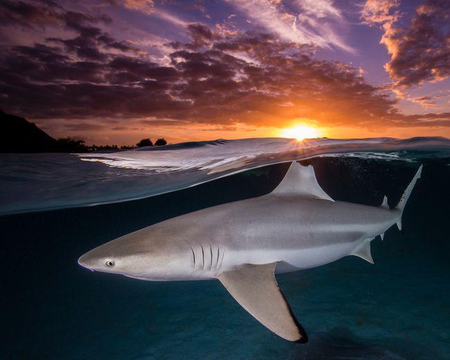 Khám phá cuộc sống dưới biển xanh sâu thẳm qua giải thưởng Nhiếp ảnh đại dương - 4