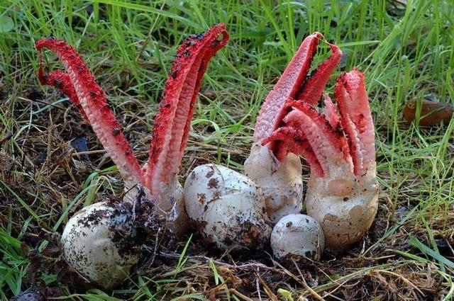 Tìm thấy nhiều quả trứng lạ trong rừng, khi chúng vươn vòi nở ra, người đàn ông bỏ chạy ngay lập tức! - Ảnh 4.