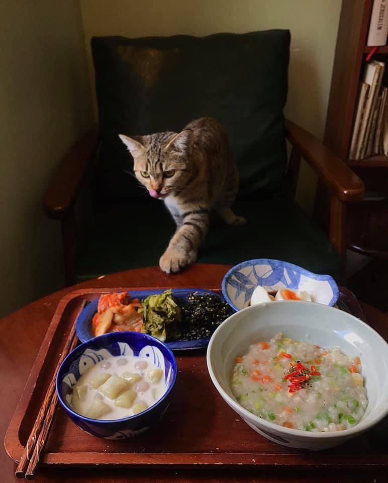 Cách ly cùng 1 chú mèo, 8x vẫn đam mê nấu toàn món ngon-4