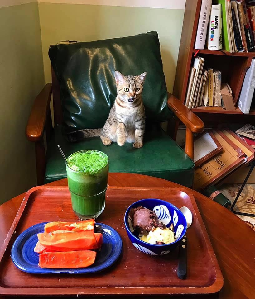 Cách ly cùng 1 chú mèo, 8x vẫn đam mê nấu toàn món ngon-7