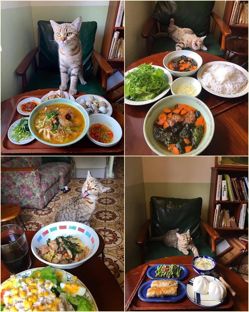 Cách ly cùng 1 chú mèo, 8x vẫn đam mê nấu toàn món ngon-9