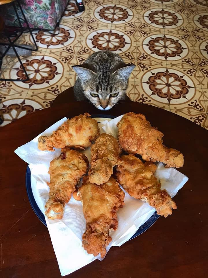 Cách ly cùng 1 chú mèo, 8x vẫn đam mê nấu toàn món ngon-14
