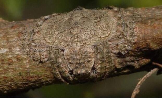 Vô tình chạm tay vào cành cây lông lá, người đàn ông phát ốm khi biết hóa ra đó là vật sống - Ảnh 1.