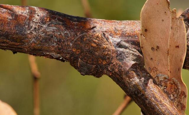 Vô tình chạm tay vào cành cây lông lá, người đàn ông phát ốm khi biết hóa ra đó là vật sống - Ảnh 4.