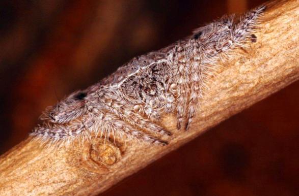Vô tình chạm tay vào cành cây lông lá, người đàn ông phát ốm khi biết hóa ra đó là vật sống - Ảnh 2.