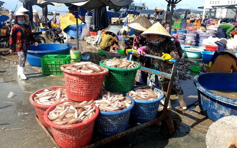 Hoạt động mua bán tại cảng cá Phan Thiết đã sôi động hơn khi vụ cá nam đang rộ.