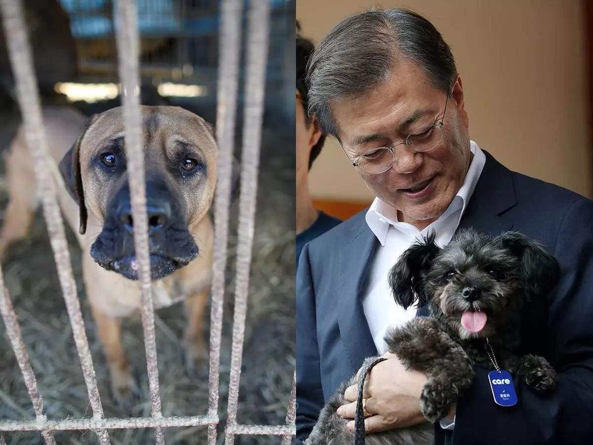 Tổng thống Hàn Quốc Moon Jae-in đề nghị cấm ăn thịt chó. Ảnh: