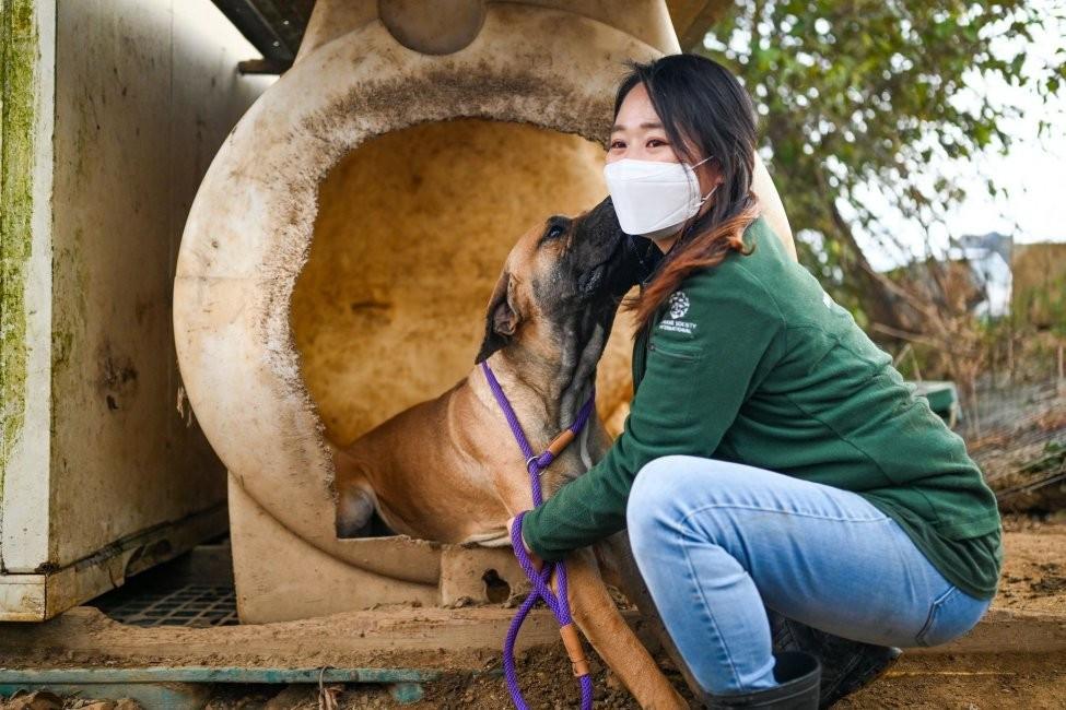 Ngày càng có nhiều người dân Hàn Quốc xem chó là thú cưng hơn là động vật lấy thịt. Ảnh: Thomas Maresca/UPI