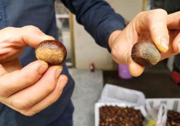 Khi mua hạt dẻ nên chọn hạt tròn hay dẹt? Mách bạn cách bảo quản hạt dẻ, để cả năm vẫn tươi và không bị hôi-3