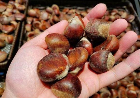 Khi mua hạt dẻ nên chọn hạt tròn hay dẹt? Mách bạn cách bảo quản hạt dẻ, để cả năm vẫn tươi và không bị hôi-6